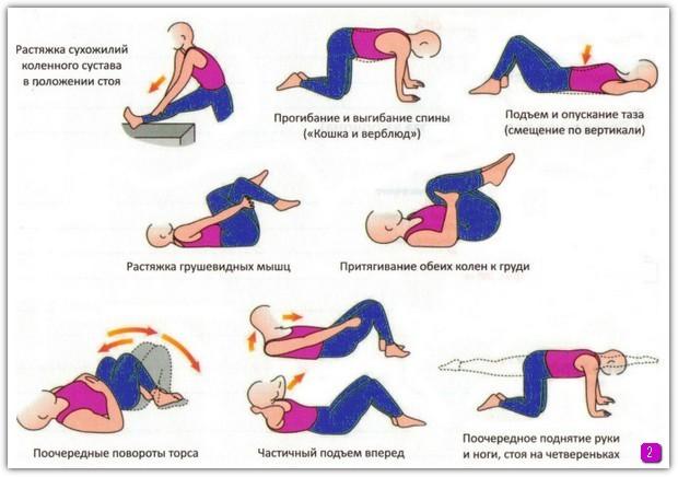 Эффективные упражнения для спины, поясницы, шеи и всего позвоночника на растяжку и укрепление мышц