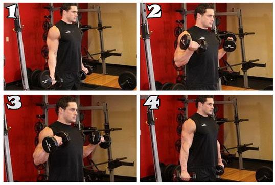 Упражнение с гантелями «сгибания зоттмана» | бодибилдинг и фитнес программы тренировок, как накачать мышцы, сбросить лишний вес