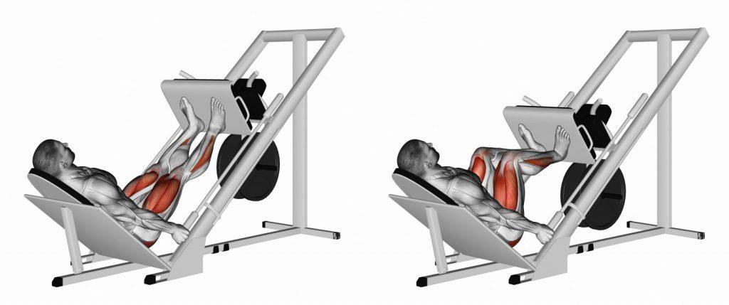 Жим ногами в тренажёре: техника выполнения и рекомендации | rulebody.ru — правила тела