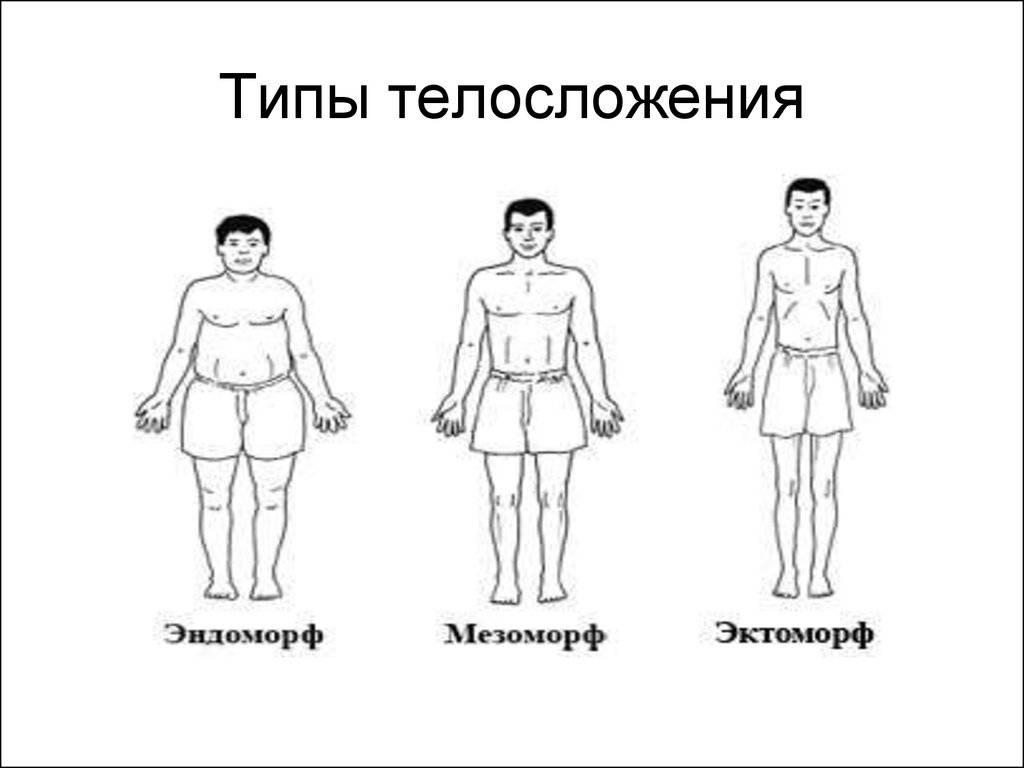 Мезоморф, эктоморф и эндоморф. теперь не запутаетесь. мезоморф, эктоморф, эндоморф: тренировки и питание. как определить свой тип телосложения?