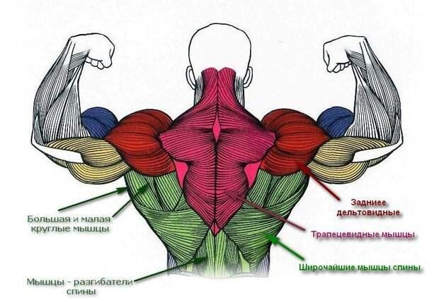 Как накачать широчайшие мышцы спины