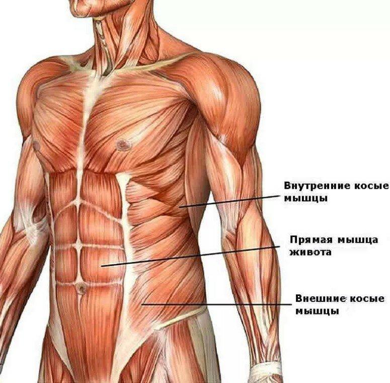 Мышцы кора: что это, зачем нужны + 30 эффективных упражнений на кор