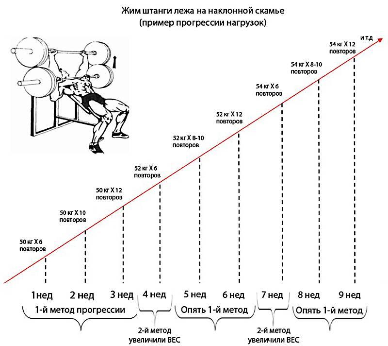 Принцип пирамиды - система джо вейдера - atletizm.com.ua