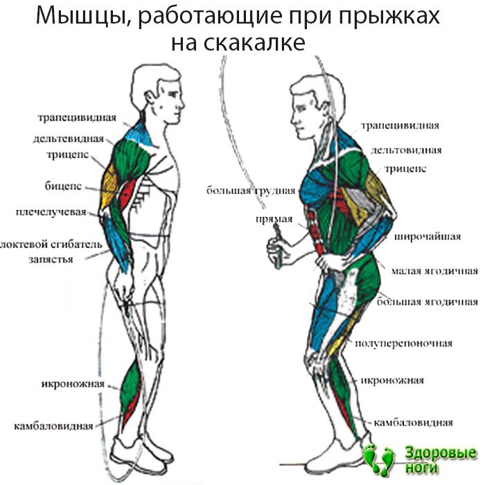 Прыжки на скакалке польза и вред. скакалка для похудения и укрепления здоровья