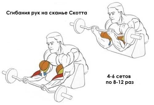 Как правильно делать подъем штанги на бицепс на скамье скотта