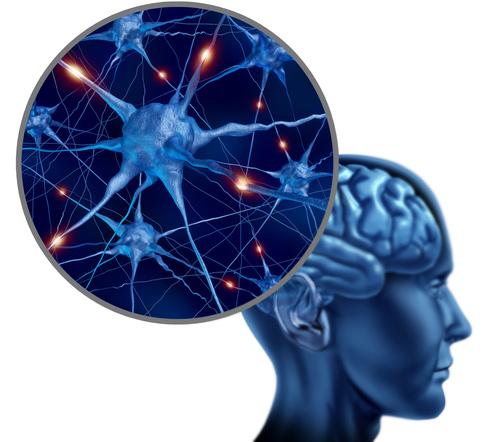 Почему для здоровья мозга и нервной системы вам нужно тренировать
