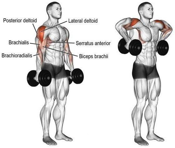 Упражнения на среднюю дельту: как делать правильно