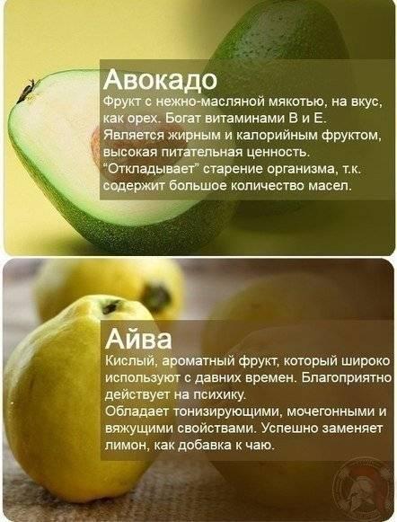 Авокадо: польза и вред для организма человека