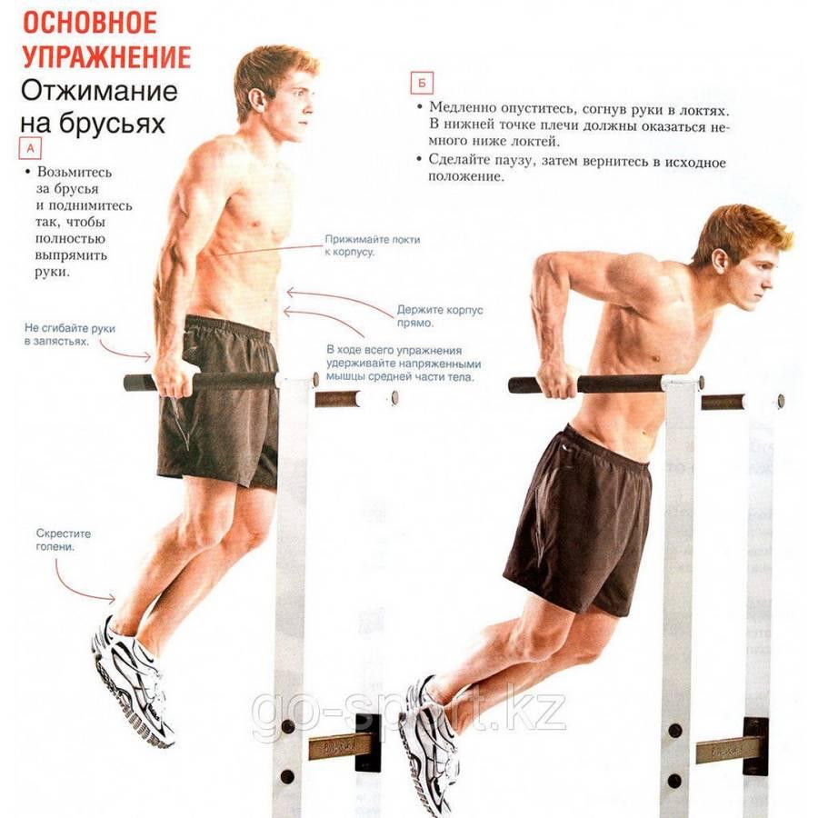 Подтягивания и отжимания. виды подтягиваний и отжиманй программы тренировок.   фитнес для похудения