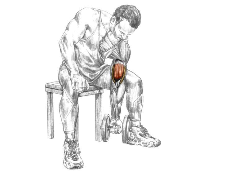 Самые эффективные упражнения для трицепса