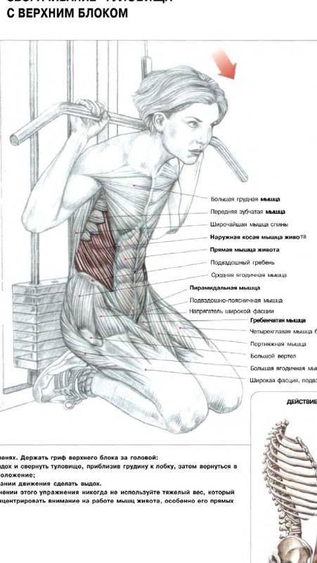 Как накачать косые мышцы живота: комплекс 10 упражнений, для укрепления пресса у мужчин, женщин