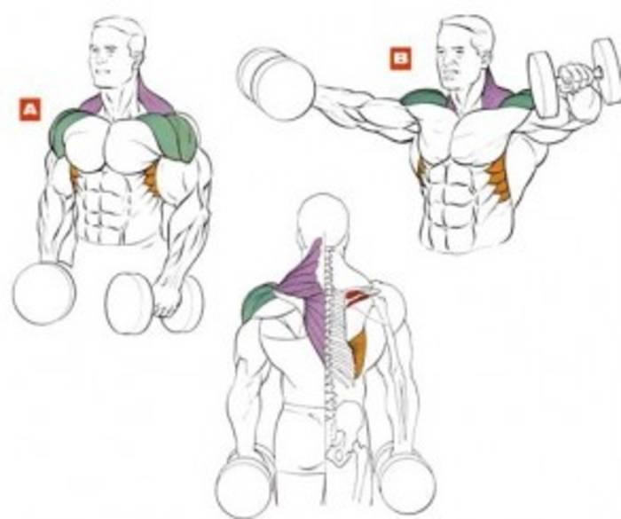 Как делать тягу штанги за спиной и для чего?