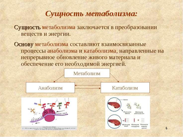 Анаболизм + катаболизм = метаболизм.