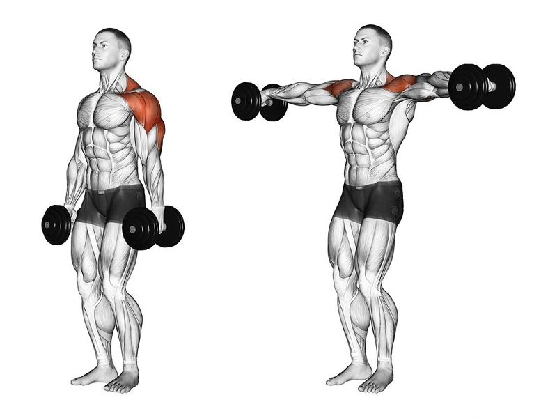 Жим гантелей стоя или сидя над головой: какие мышцы работают и какой вариант лучше