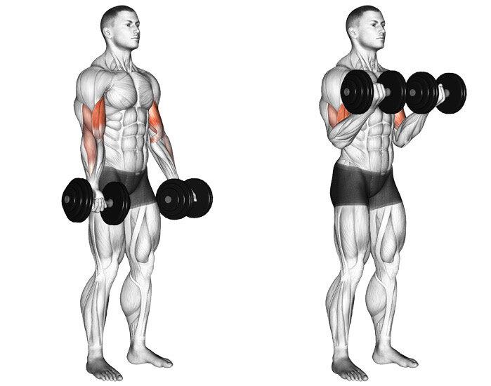 Как накачать предплечье гирей: лучшие упражнения для дома