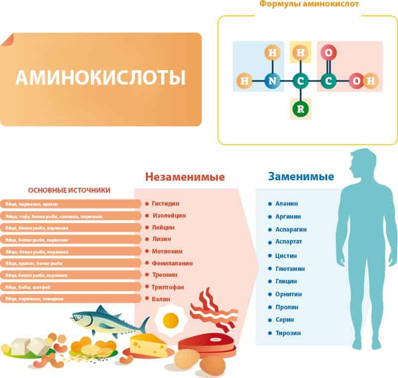 Биологическая роль фенилаланина