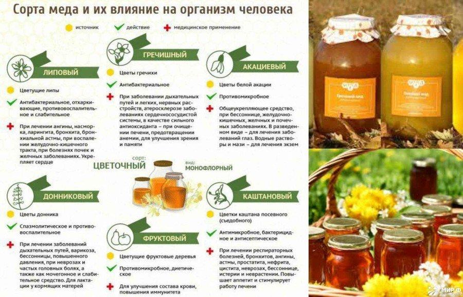 Мед манука - суперфуд здоровья и долголетия. чем он полезен