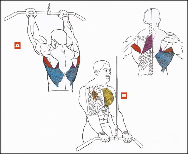 Как накачать мышцы спины в домашних условиях (фото, видео)