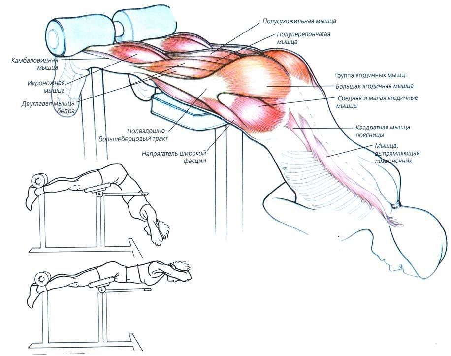 Как укрепить поясницу с помощью лечебной гимнастики и упражнений на турнике?