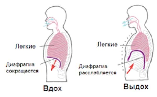 Как правильно дышать носом или ртом