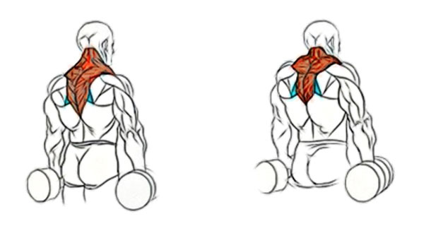 Как накачать шею: профессиональные секреты бодибилдеров