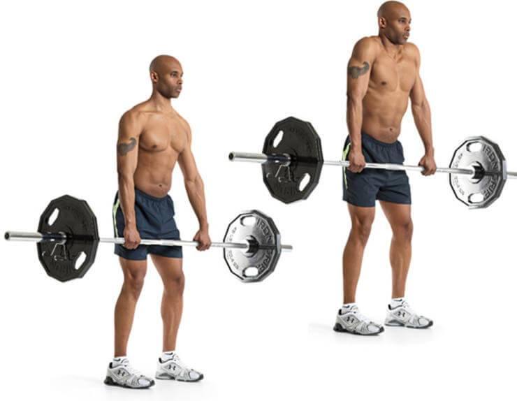 Шраги со штангой: техника выполнения, какие мышцы работают