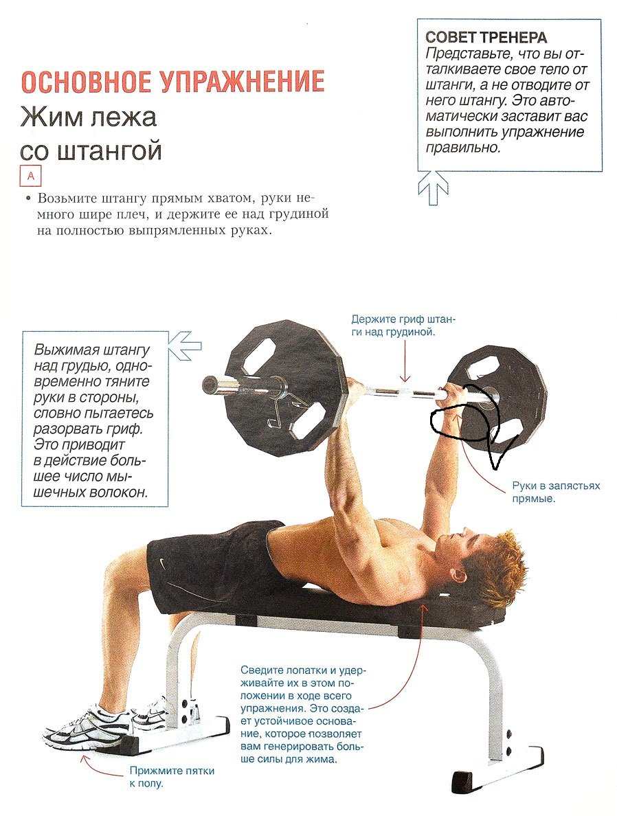 Жим штанги на наклонной скамье: техника и важные нюансы упражнения