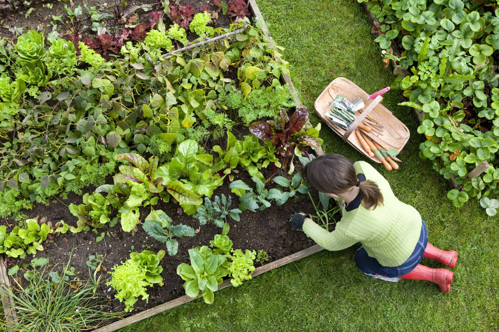 Устройство огорода: 10 основных правил