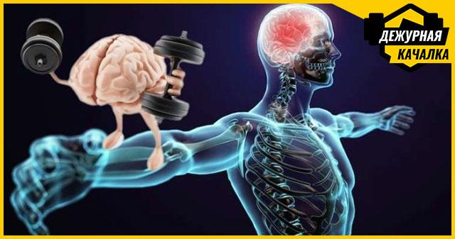Мышечная память: что это такое и как она помогает нам оставаться в форме