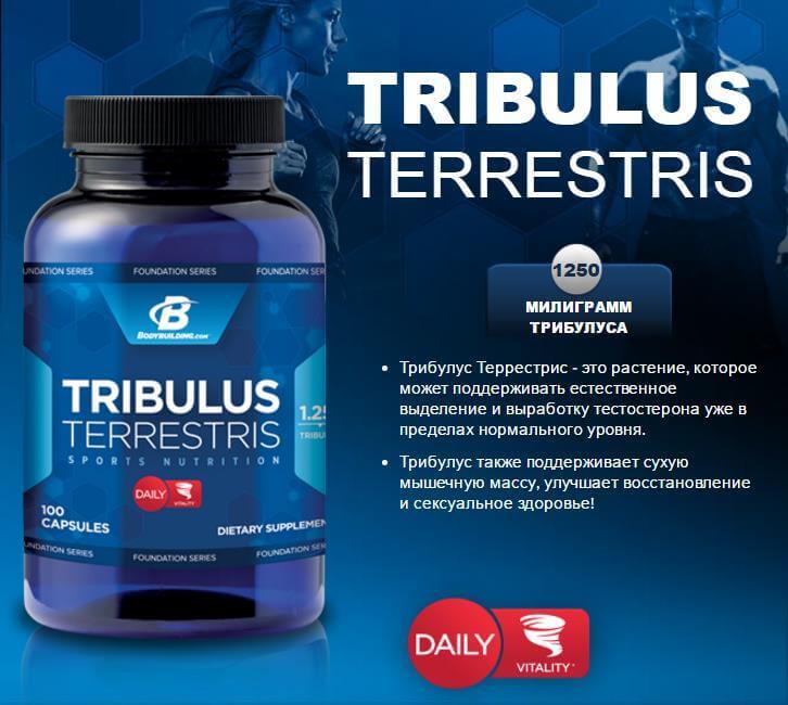 Трибулус терестрис для офигенного тела! как принимать трибулус