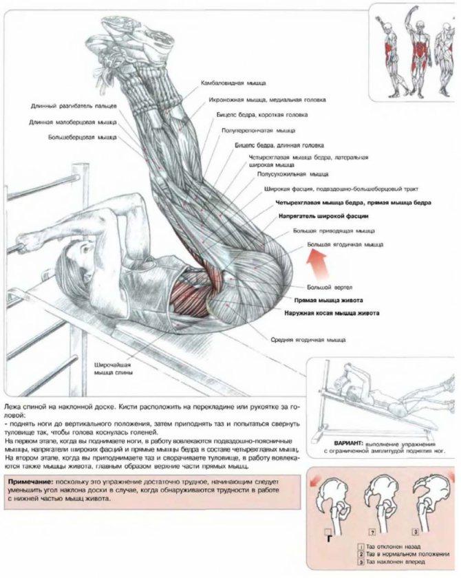 Подъем ног сидя: делаем упражнение правильно