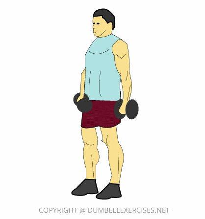 Сгибания зоттмана: видео и фото упражнения