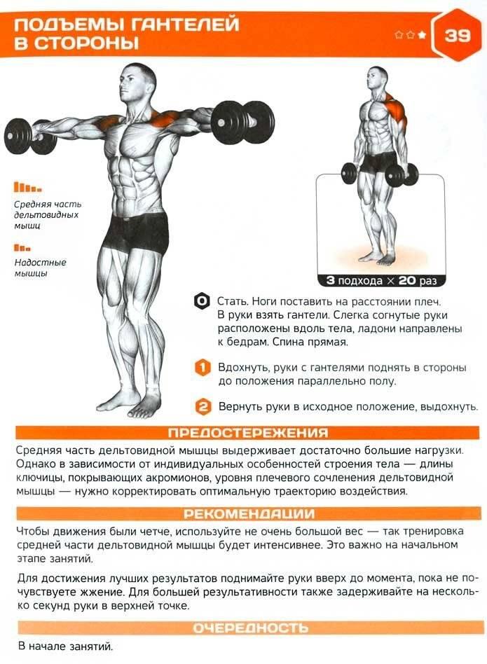 Подъём гантелей перед собой: техника выполнения и варианты упражнения | rulebody.ru — правила тела