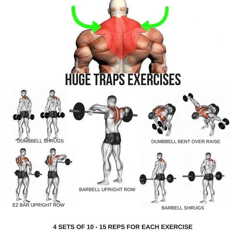 Тренировка плеч на массу в тренажерном зале, программа тренировок