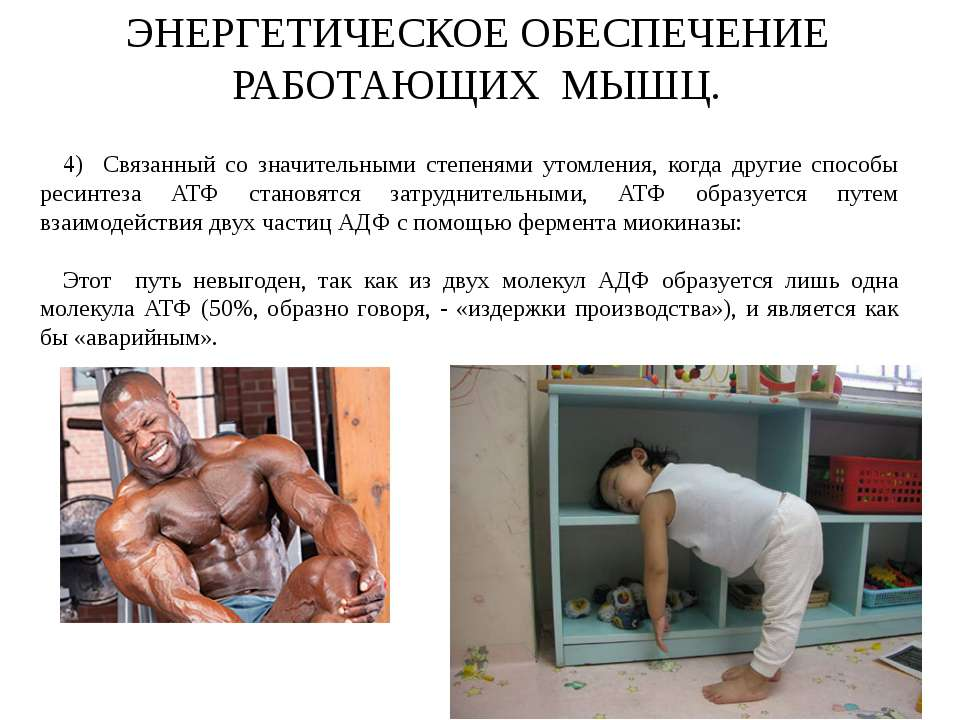 Основы энергообеспечения мышечной деятельности - диагностер