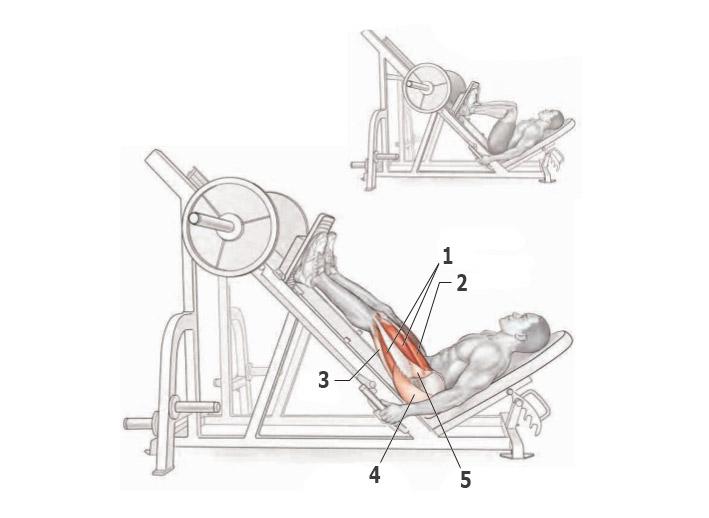 Жим ногами в гакк-машине: правильная техника, работающие мышцы и ошибки