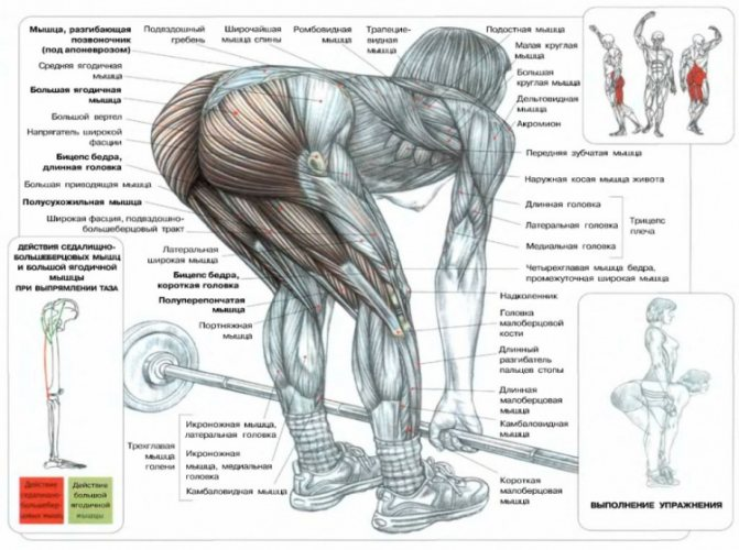 Становая тяга на одной ноге: техника выполнения, виды