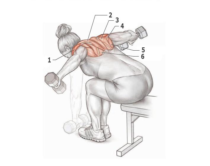 Упражнения на спину в зале — программа тренировок со штангой и гантелями