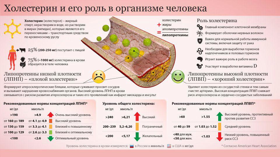 Что нельзя и можно есть при повышенном холестерине в крови - список продуктов