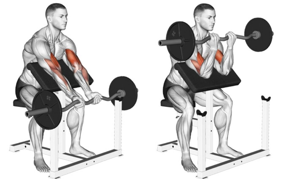 Сгибание рук на скамье скотта: техника и варианты упражнения