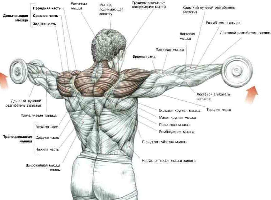 Как накачать огромные плечи: пошаговые советы
