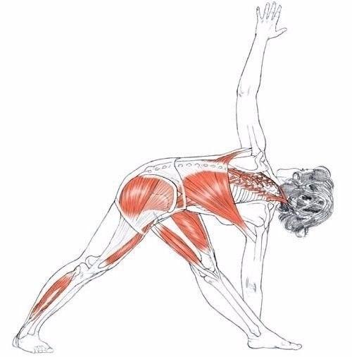 Упражнения для растяжки спины и позвоночника: укрепление мышц и растяжка при болях
