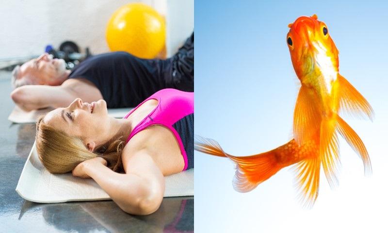 Упражнение «золотая рыбка» для спины по системе кацудзо ниши
