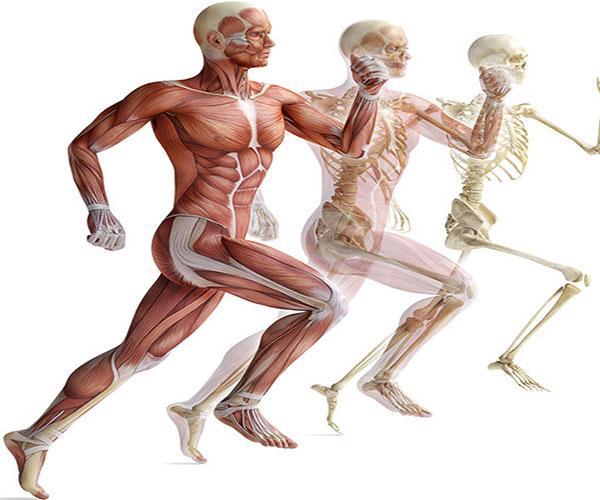 Как уменьшить выработку молочной кислоты в мышцах