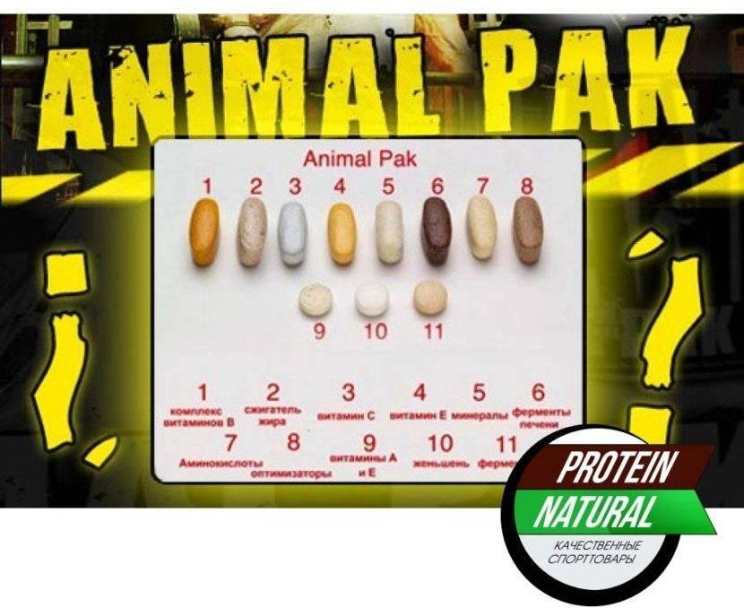 Animal pak витаминно-минеральный комплекс как принимать, состав и отзывы