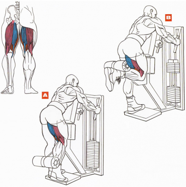 Самые эффективные упражнения на бицепс бедра