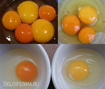 От чего зависит цвет желтка куриного яйца и почему он разный
