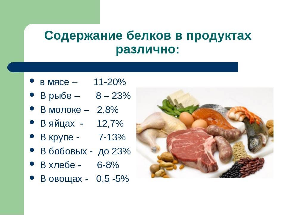 Где взять белок: продукты - рекордсмены по содержанию протеина