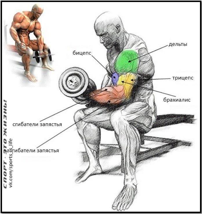 Где находится бицепс бедра: особенности анатомического строения двуглавой мышцы