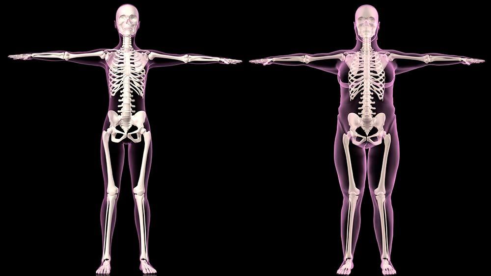 Сколько костей в руке человека? разбираемся вместе. сколько весит скелет человека